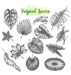 tropical leaves palm jungle leaf tropic set hand vector image