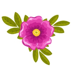 dogrose flower and leaves vector image