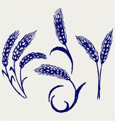 Wheat and rye vector image