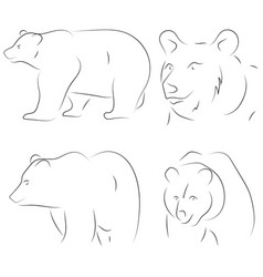 Black line bears on white background hand drawn vector