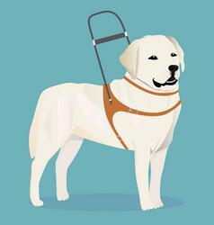 Labrador retriever guide dog vector