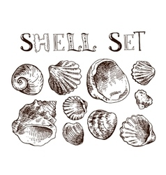 Shell hand drawn vector image