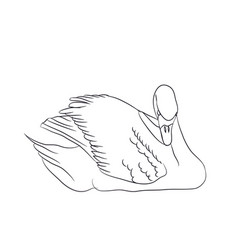 swan lines vector image