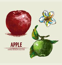 Digital detailed apple hand drawn vector