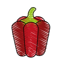 Bell pepper icon image vector