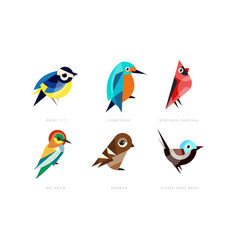 Colorful stylized birds collection great tit vector