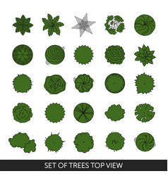 set trees top view vector image
