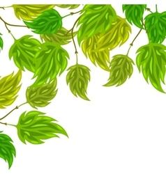 Background of stylized green leaves for greeting vector