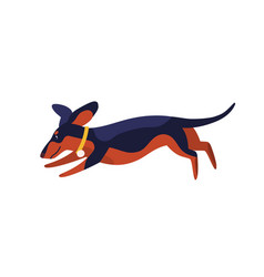 funny clever dachshund dog breed running vector image