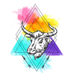 head bull hand drawn beautiful vector image