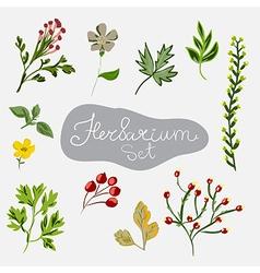 Herbarium set Different plants vector