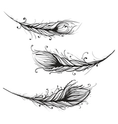 Intricate Decorative Feathers vector