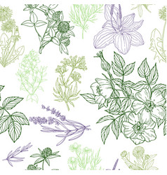 Seamless pattern medicinal herbs and flowers vector