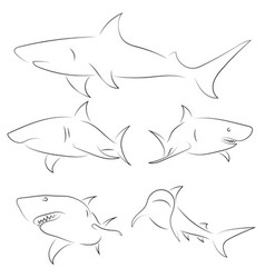 Black line sharks on white background hand drawn vector