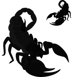 black scorpion isolated on white vector image