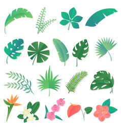 cartoon set isolated tropical leaves vector image