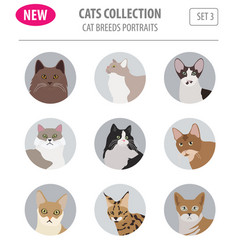 Cat breeds icon set flat style isolated on white vector