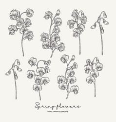 Hand drawn sweet pea spring flowers set garden vector