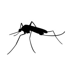 Mosquito black silhouette vector image