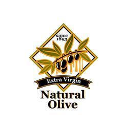 olive oil extra virgin product label design vector image