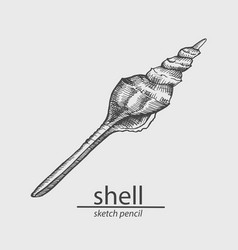 Shell sketch style vector