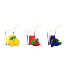 Quince redcurrant and grapes juices vector