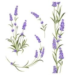 Set lavender vector