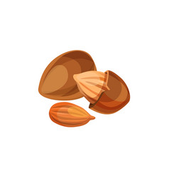 Apricot kernels icon vector