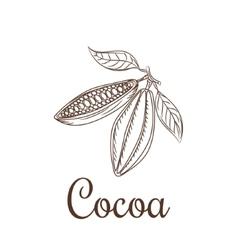 Cocoa beans sketch vector