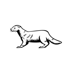 European mink russian mink or eurasian mink retro vector