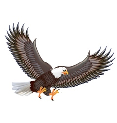 Mighty predator eagle in flight isolated on a whi vector