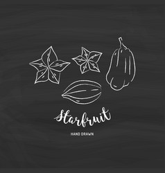 Starfruit graphic drawing exotic fruit sketch of vector
