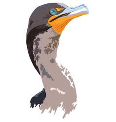Florida everglades cormorant vector