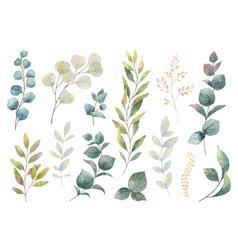 hand drawn watercolor set herbs vector image