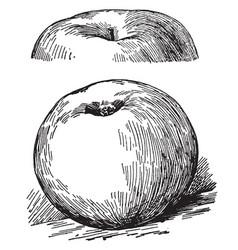 Rhode island greening apple vintage vector