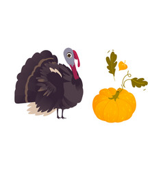 farm hen turkey and ripe orange pumpkin vector image