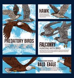 Predatory hawk and eagle birds falconry hunting vector