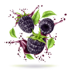 Realistic blackberry juicy fruit in motion vector
