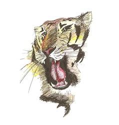 sketch of gnarling tiger vector image