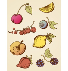 vintage fruits vector image vector image