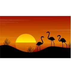 At sunset flamingo on lake landscape vector