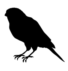 Black silhouette of canary vector