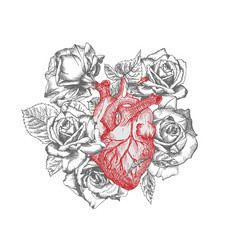Heart with bouquet roses realistic hand-drawn icon vector