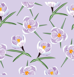 pattern with spring purple crocus vector image