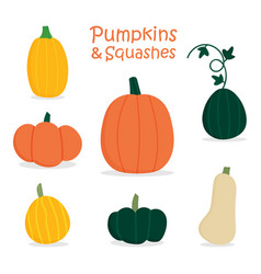Pumpkin and squashes set collection vector