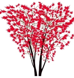 Card with autumn maple tree Red maple trees in vector image vector image