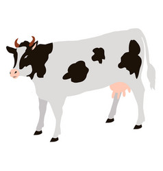 Adult cow with black spots isolated icon vector