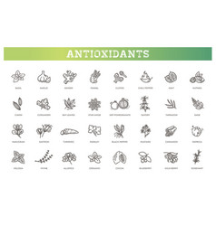 Antioxidant food herbs and spices vector