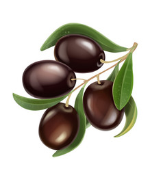 black olives branch realistic vector image