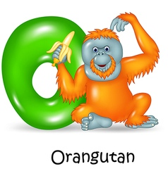 Cartoon of O Letter for Orangutan vector